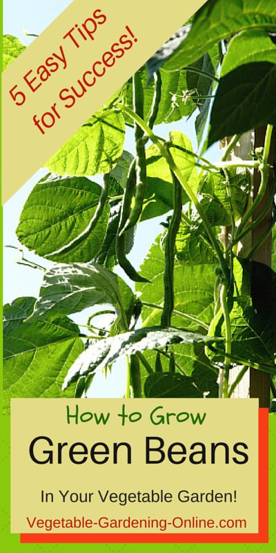zone 9 herb planting guide