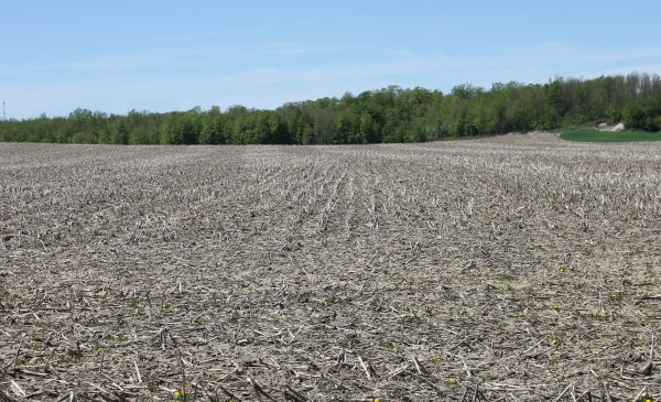 midwest cover crops field guide